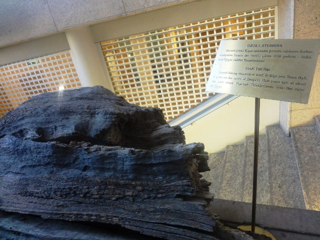 Поездка в Ригу. Кусок древнего дуба
