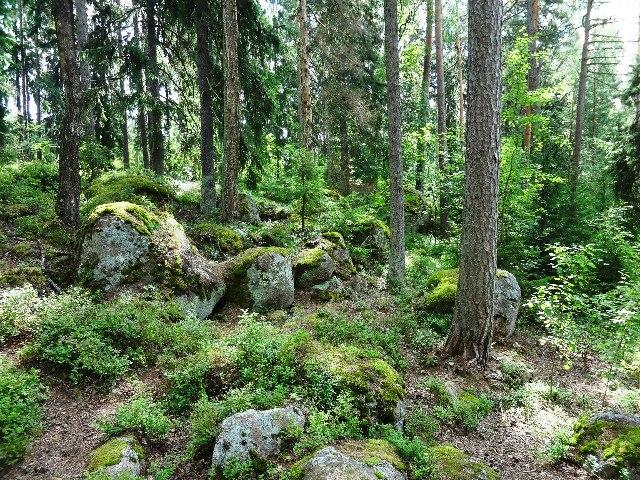 Финляндия. Лангинкоски_17