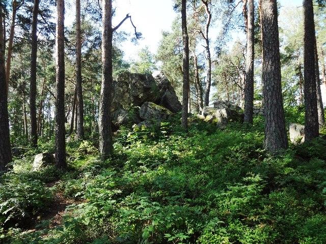 Финляндия. Порвоо. Лес на холме