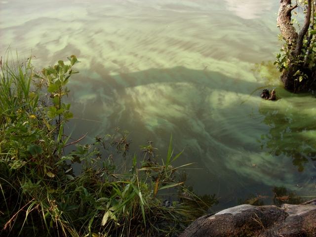 Комарово. Щучье озеро