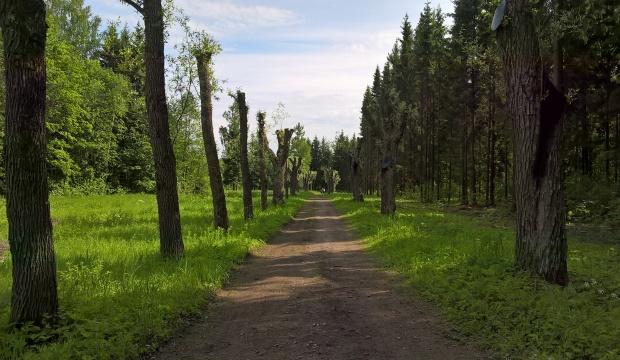 babolovsky park_11